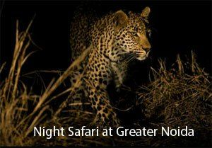 Night safari adds 87 acres, work set to begin in June - The Times of India