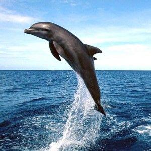 dolphins natural show  #PantaiLovinaBali