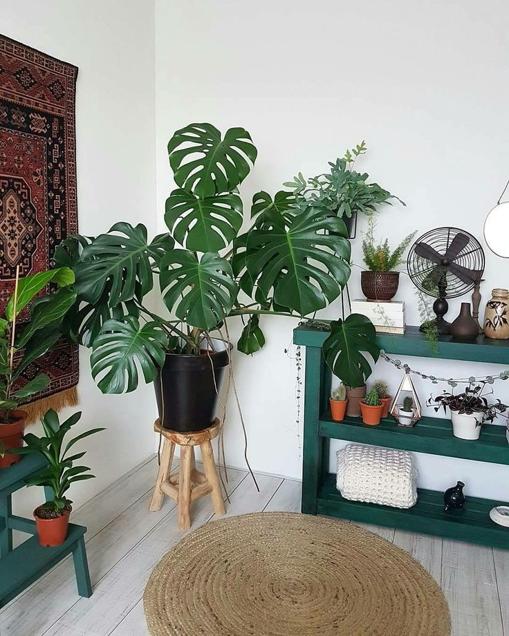13 best Houseplants inspirations images on Pinterest Gardening - condensation dans la maison