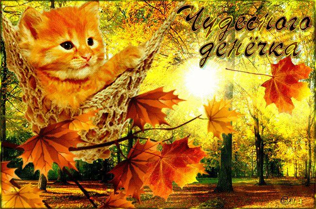 открытка с добрым утром четверга осень класс показан