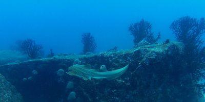 Richelieu rock dive site - Similan Islands Diving Guide | dive maps and information