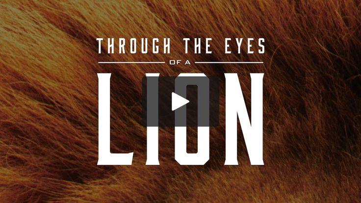 Fresh Life Church | Run Toward The Roar |oct. 9