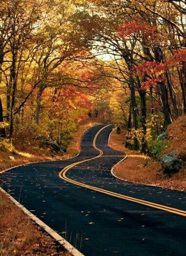 autumn, road, and fall kép
