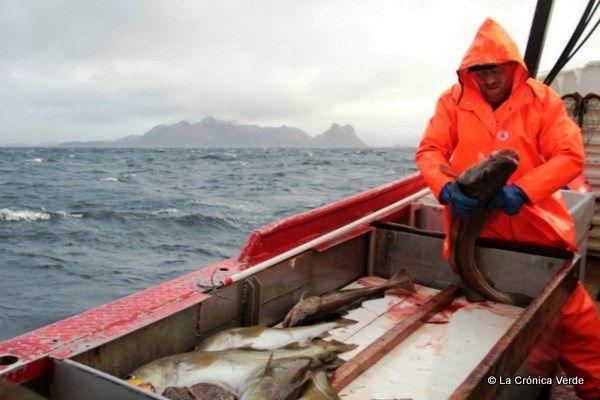 Nos hicimos la ruta del bacalao noruego certificado #HattvikaLodge
