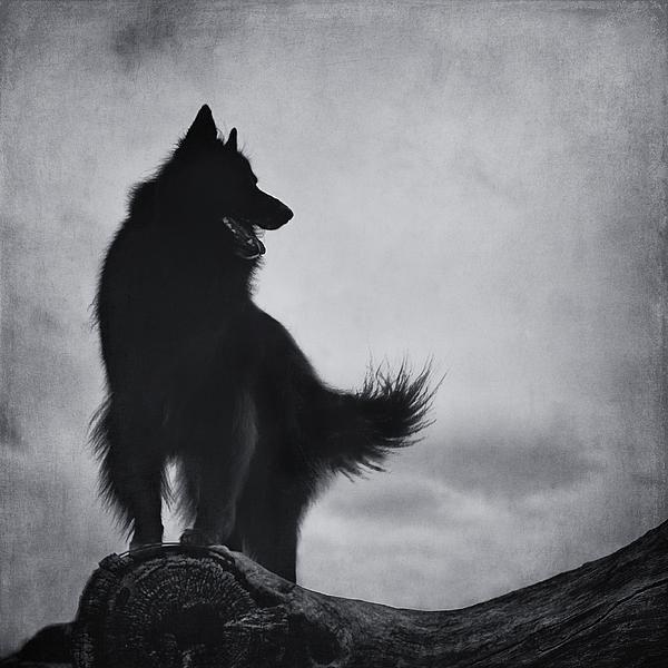 Title  As Night Falls.   Artist  Wolf Shadow Photography   Medium  Photograph - Photograph