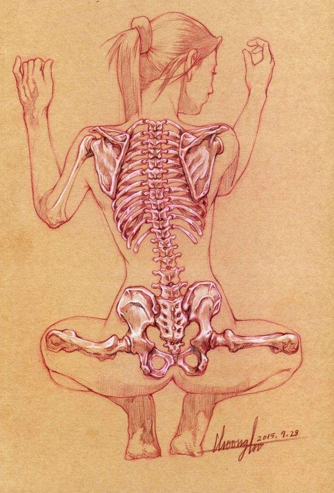 오늘은 인체해부학 중 늑골과 골반 뒷면입니다. : 네이버 카페