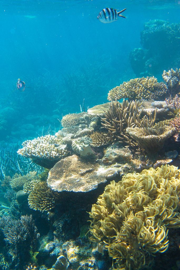 snorkeling at the Great Barrier Reef, Australia
