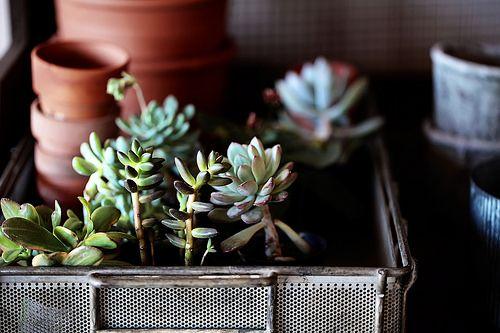succulents by -barbara carroll- #flickstackr  Flickr: https://flic.kr/p/DHLtFm