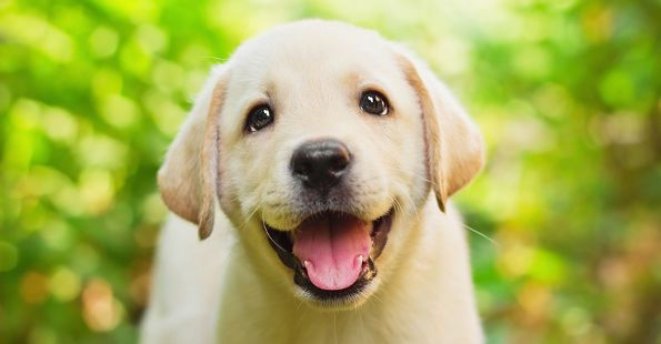 How To Crate Train a Puppy: Day, Night, Even If You Work  Check out our dog training tips at http://bestdogcratesandbeds.com!