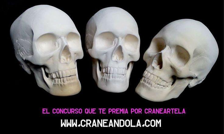 El concurso que te premia por Craneartela! #skull #concursocraneandola #arte #convocatoria #calavera #design #art #paint #intervencion #calaca #ceramica