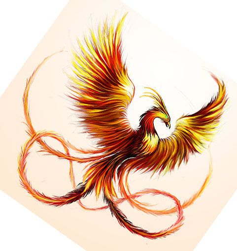 Beautiful Phoenix  How I live my life.. Always rising from the ashes stronger and brighter than before
