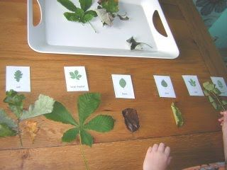 Activity of the Week – Classifying Leaves at Living Montessori Now (Photo from Two Little Seeds)