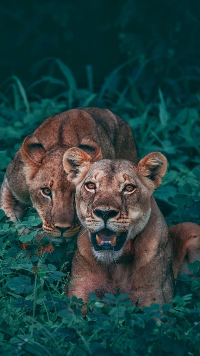 Animals Wallpaper Iphone Wild Animal Wallpaper Cute Animals Wild Animals Photography
