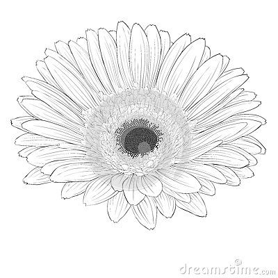 1000 images about Flower Drawing
