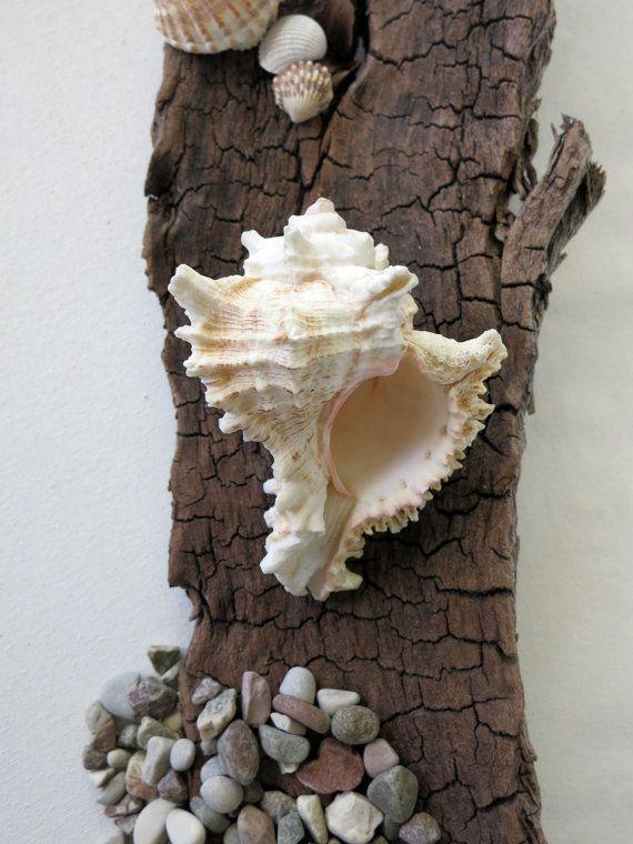 Murex Seashell 3 3/4  Murex Chicoreus Ramosus by MrsBeachComber