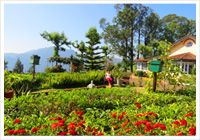Whispering Palms Beach Resort Goa   Whispering Palms Resort  Goa   Whispering Palms Resort   Whispering Palms