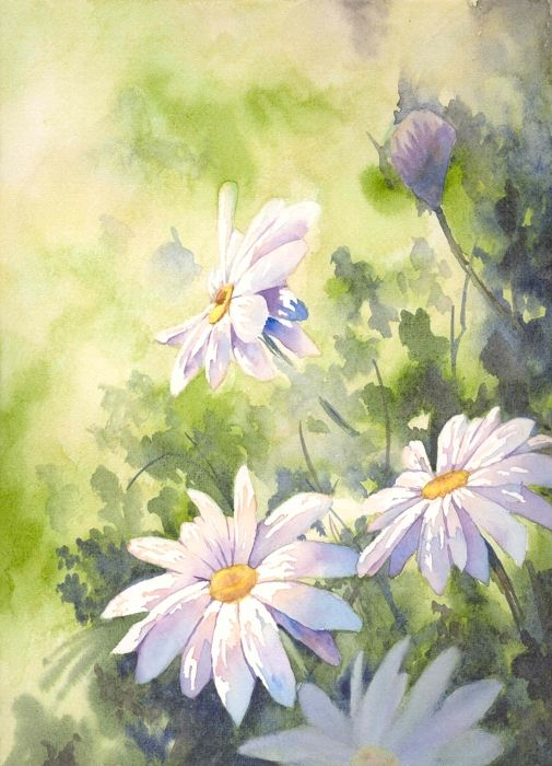 Daisy watercolor &#9829name?                                  love this print