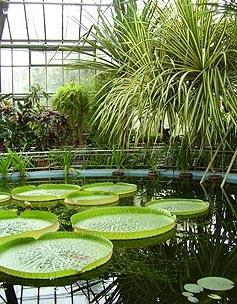"""Cluj-Napoca, Romania (Transylvania) - """"Alexandru Borza"""" Botanical Garden"""