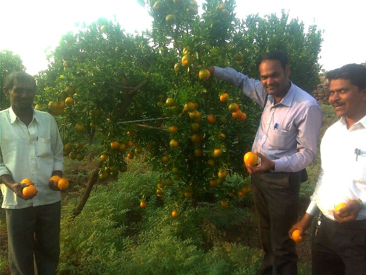 Kissan Grow Excellent results in Maharashtra.