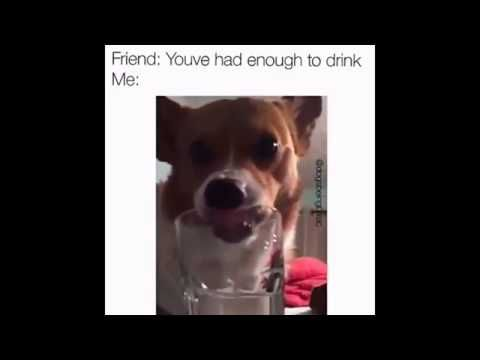 cheaptravelbooker blogg: very funny dog with long tongue drinking out of a ...