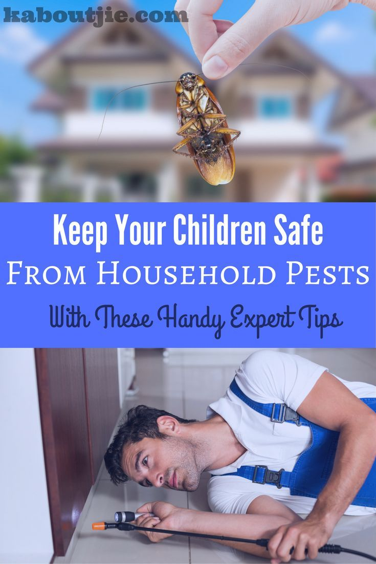Keep Your Children Safe From Household Pests With These Handy Expert Tips  As a parent, it's important to know how to keep your children safe from household pests. The way you can do this is with preventative measures. Here are some expert tips on preventing pests in your household.    #householdpests #pestcontrol #keepfamilysafefrompests