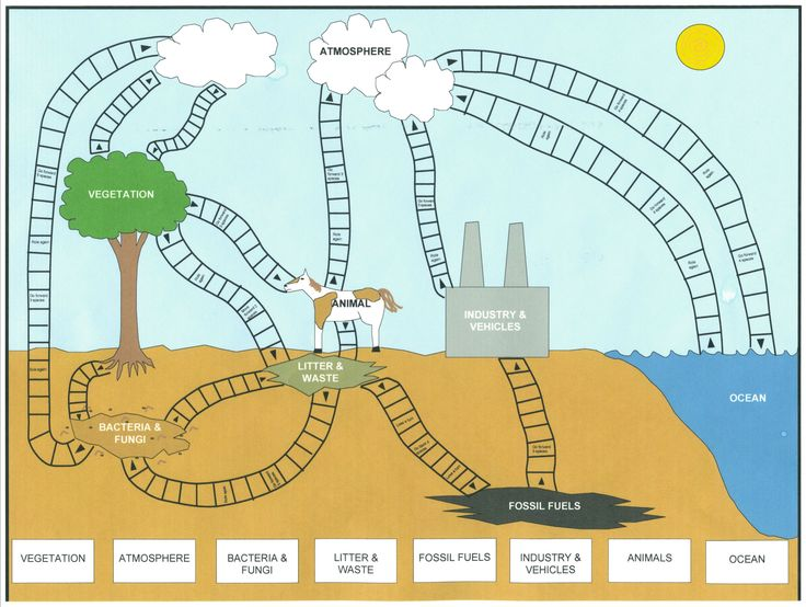 Worksheets The Carbon Cycle Worksheet 25 best ideas about carbon cycle on pinterest 5th grade science blank worksheet