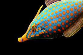 Bildergebnis für exotische fische