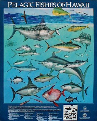 1000 images about sea life on pinterest hawaii fish for Hawaiian fish names and pictures