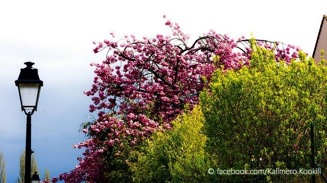 Senlis - France