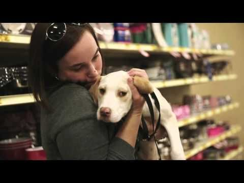 Adopt a Pet at National Adoption Weekend May 1315, 2016