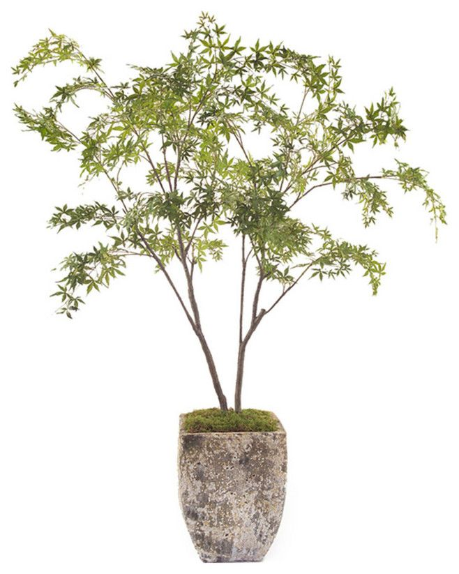 283 Best Images About Ȑ�地花器 On Pinterest Plant Stands