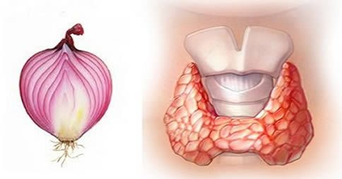 In questo articolo ti parleremo di un rimedio a base di cipolla rossa per combattere [Leggi Tutto...]