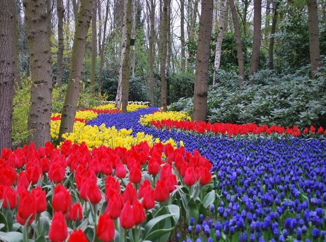 15 de flori gradina efecte speciale: Hobby-uri: Lifestyle: Subscribe.Ru