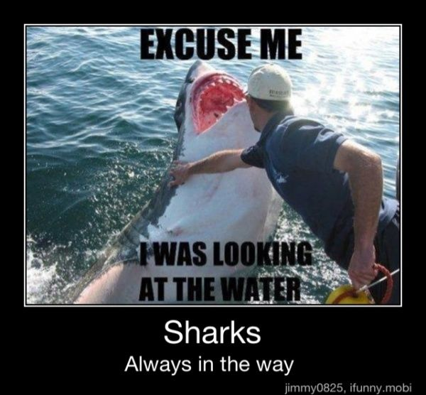 Sharks, always in the way.Funny Things, Laugh, Sharks Weeks, Funny Pictures, Funny Stuff, Humor, Excuses Me, Funnystuff, Animal