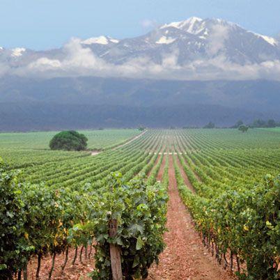 Mendoza, Argentina | Primus To learn more about #Mendoza click here: http://www.greatwinecapitals.com/capitals/mendoza