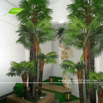 Beautiful Indoor Trees For Sale Pictures - Amazing House ...