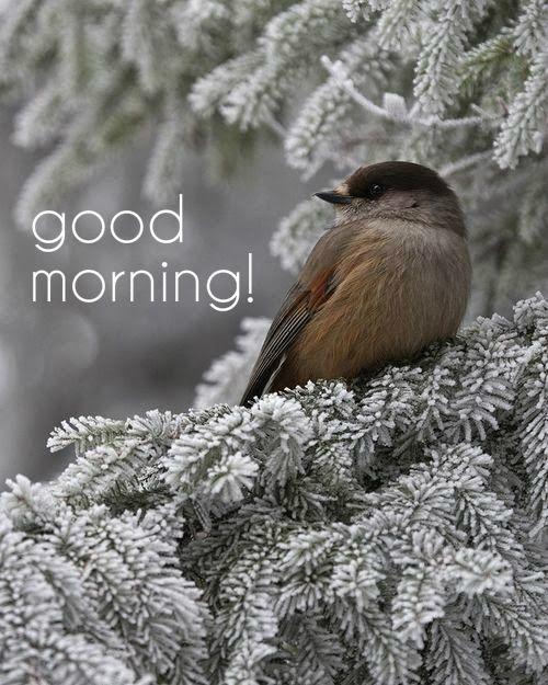Good Morning Beautiful Birds Images : Best images about good morning have a beautiful day on