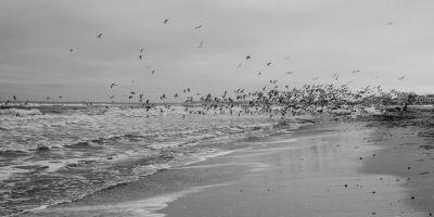 Misterele Mării Negre. De ce e neagră marea noastră şi ce taine ascunde în adâncuri. Specialiştii plasează aici Potopul lui Noe