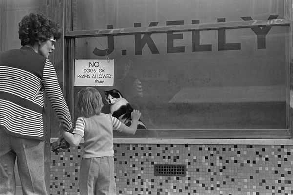 The shop cat at Kelly's Pie & Mash Shop, Bethnal Green Rd. 1970's