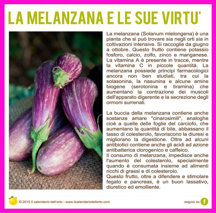 La melanzana e le sue virtù