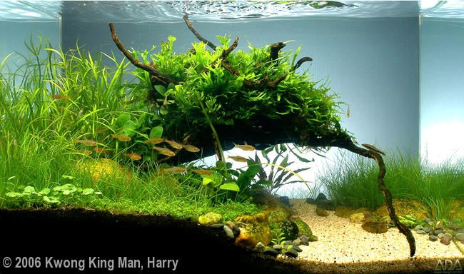 "Tank Size	45 x 27 x 30 cm (18 x 11 x 12 in)  Volume	37L (10 gallons)  Lighting	ADA 15W FL x 4  Filtration	Tetra 75   Title	Green Morning  Plants	1) Microsorium pteropus 2) Microsorum ''narrow"" 3) Anubias barteri var. nana 'Petite' 4) Elecharis azurea 5) Hydrocotyle leucocephala 6) Hemianthus callitrichoides 7) Echinodorus tenellus 8) Juncus Repens 9) Cryptotyne parva  Fish/Animals	1) Amber Tetra 2) Crossocheilus siamensis"