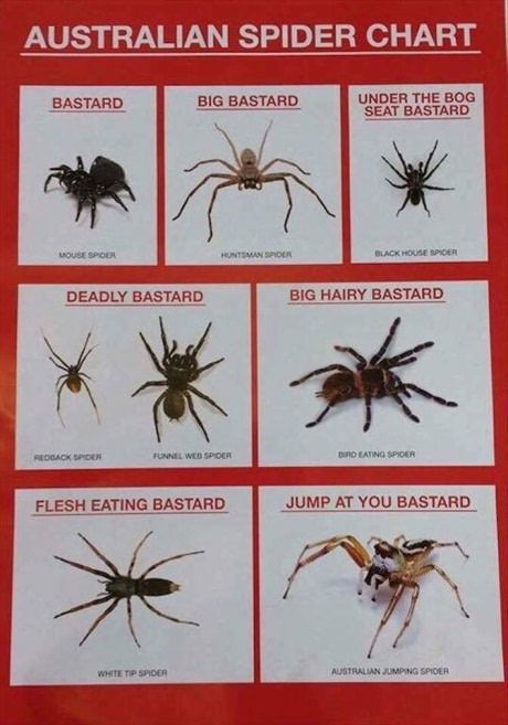 How we see spiders in Australia