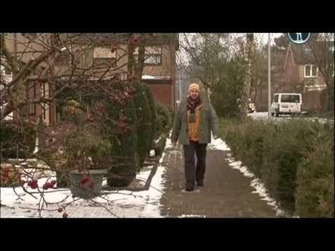 [Планета собак] Стабихунд. Нидерланды.