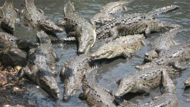 """Ramree Island: Infested with saltwater crocodiles, during WWII nearly 500 Japanese troops were eaten alive here. In fact, the incident is listed in the Guinness Book of World Records as the """"greatest disaster suffered from animals"""""""