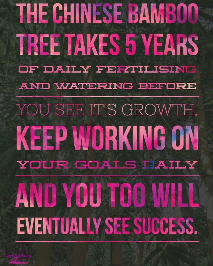The Chinese Bamboo tree takes 5 years of daily watering before you see it's growth. Keep working on your goals daily and you too will eventually see success. ❤ #divinesparkle