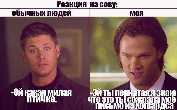 Реакция на сову: Обычных людей: Ой какая милая птичка. Моя: Эй ты пернатая, я знаю это ты сожрала моё письмо из Хогвардса. #Дин_Винчестер #Сэм_Винчестер #Мем #Сверхъестественное #Dean_Winchester #Sam_Winchester #Supernatural