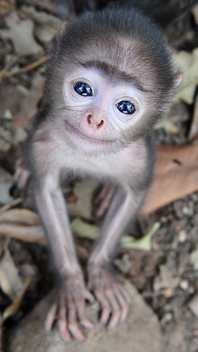 tiny monkey...Melts my heart!
