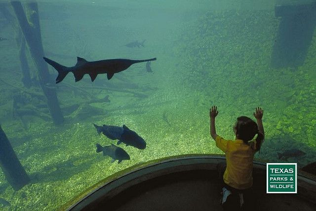 25 best ideas about fish hatchery on pinterest for Fish hatchery ohio