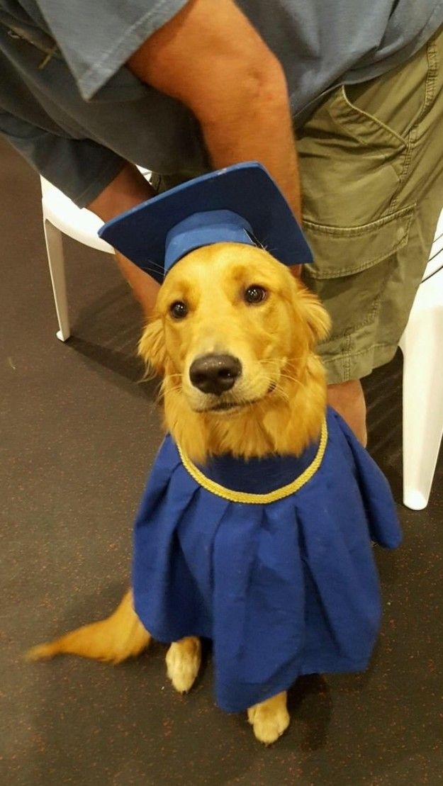 Golden with a degree