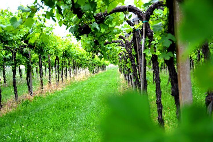 vine # wine # B Pianoro # luxury bed and breakfast